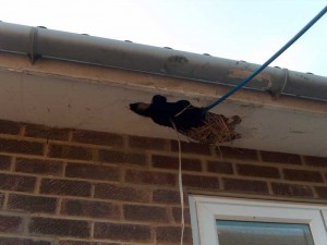 Asbestos insulation board used as a soffit to a 1970's residential property - deliberately broken to allow cables to be passed through